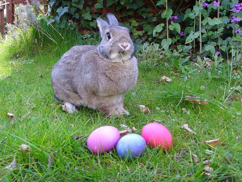 TRY toivottaa kaikille oikein hyvää pääsiäistä
